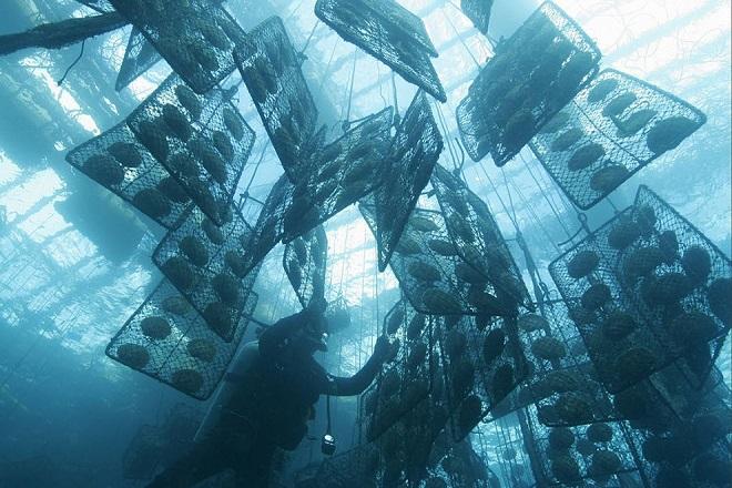 Морская культивация