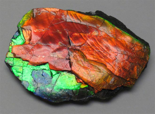 камень аммолит